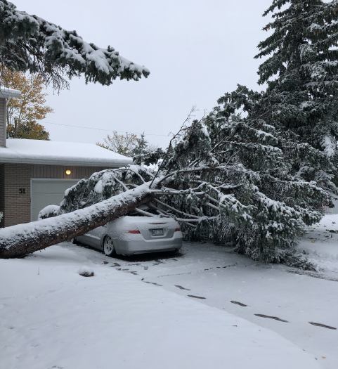 Storm Damage Tree on Car